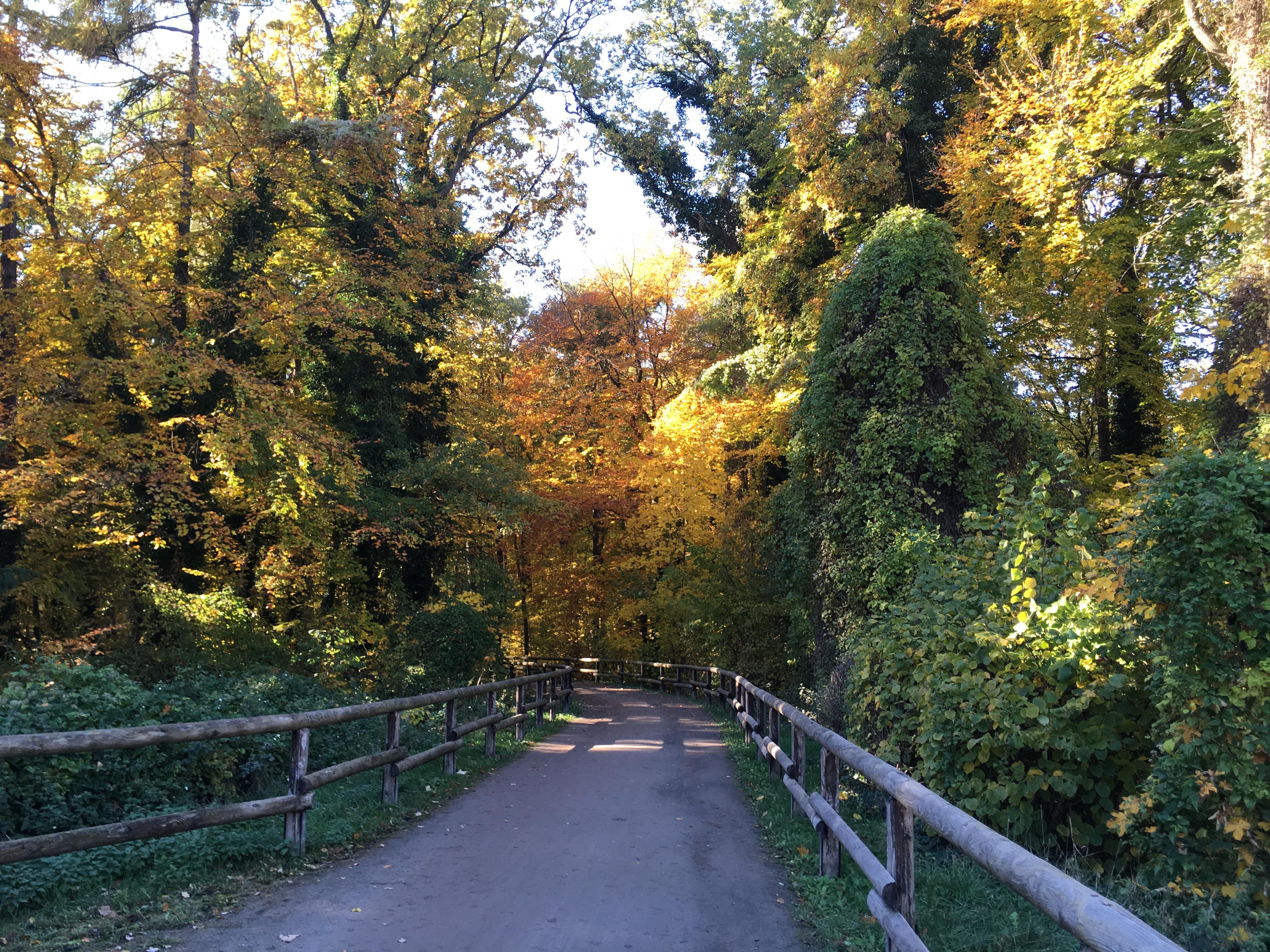 Eilenriede - Schneckenbrücke