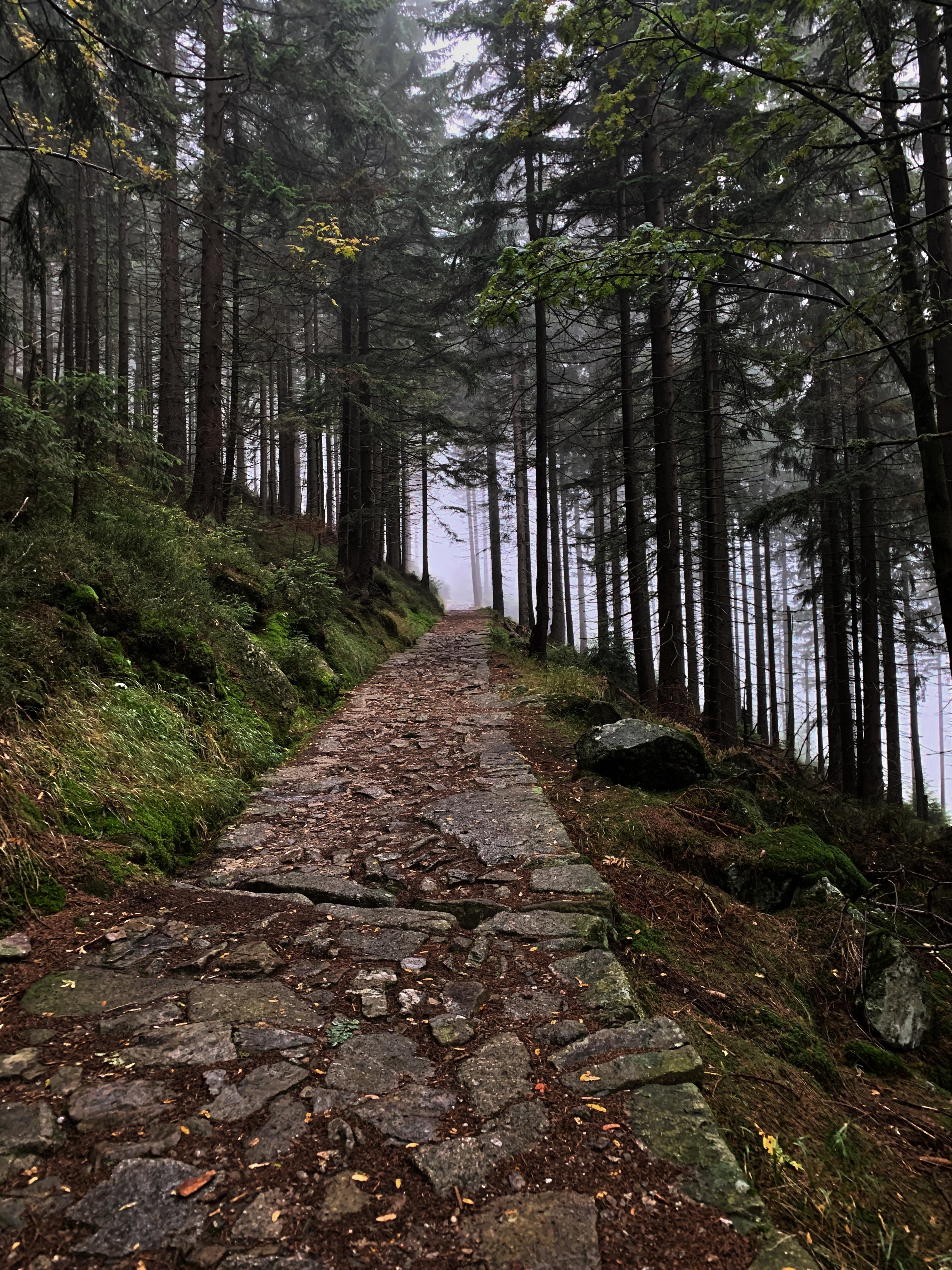 Wanderweg im Nebel